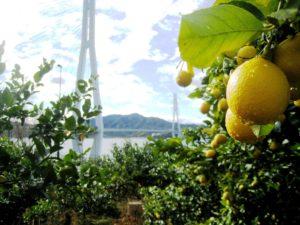 12-lemon